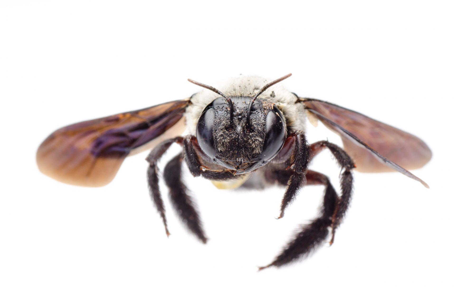 exterminator in Severna Park - Raven Termite and Pest Control