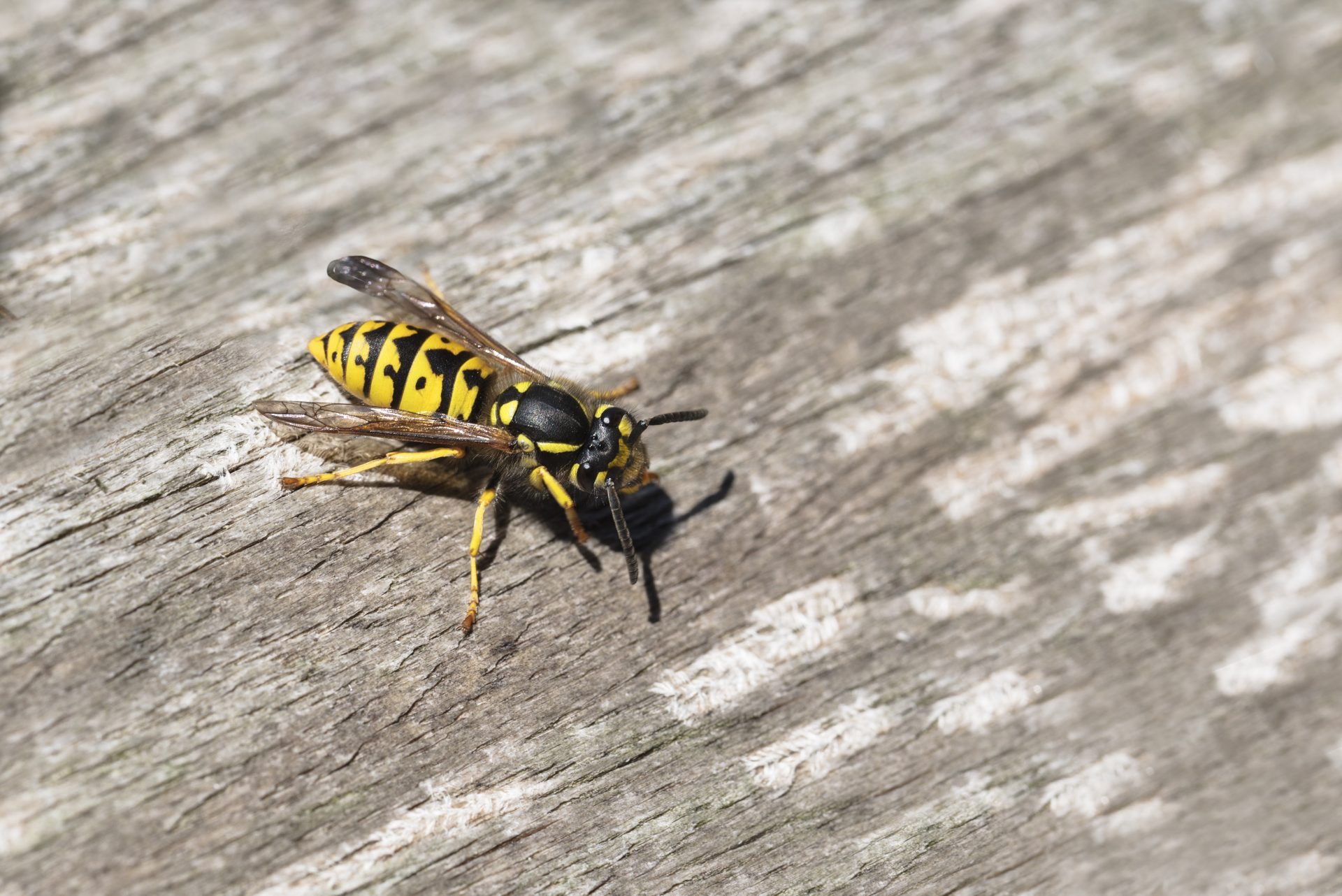 exterminators in Prince George's County -- Raven Termite and Pest Control