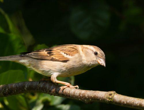 Exterminator to Remove Nuisance Birds