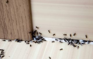 exterminator in Jessup -- Raven Termite and Pest Control