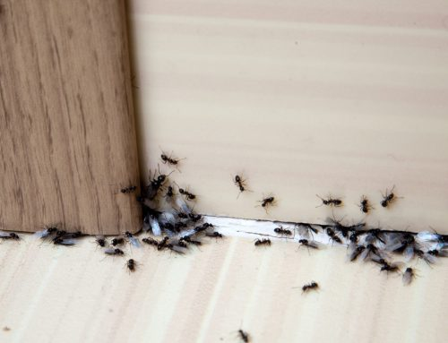 Ants? You Need an Exterminator