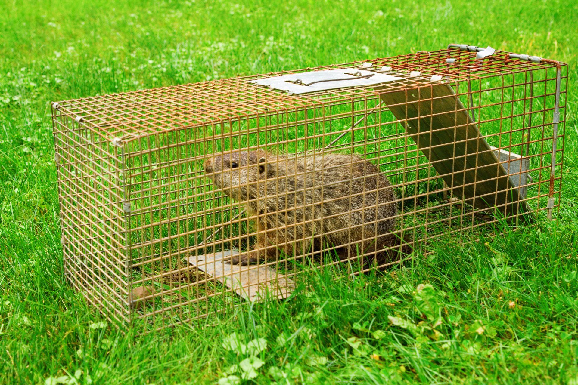 exterminator in Hyattsville -- Raven Termite and Pest Control