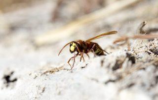 pest control in Glen Burnie -- Raven Termite and Pest Control