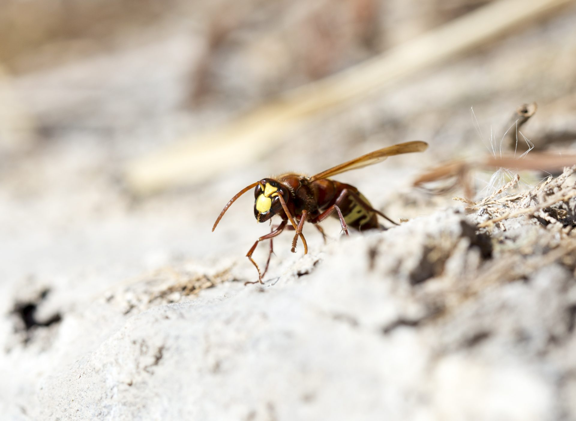 pest control in Glen Burnie -- Raven Termite and Pest Control