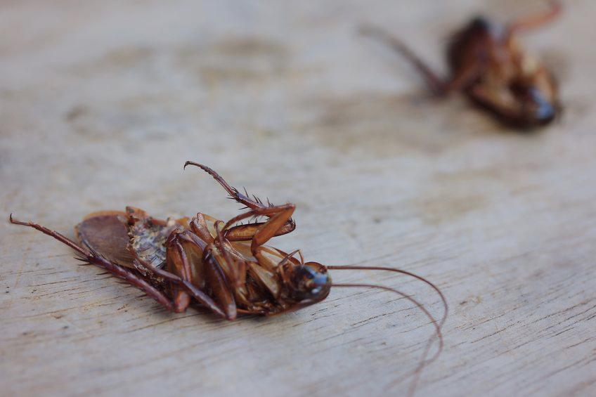 exterminators in Timonium -- Raven Termite and Pest Control