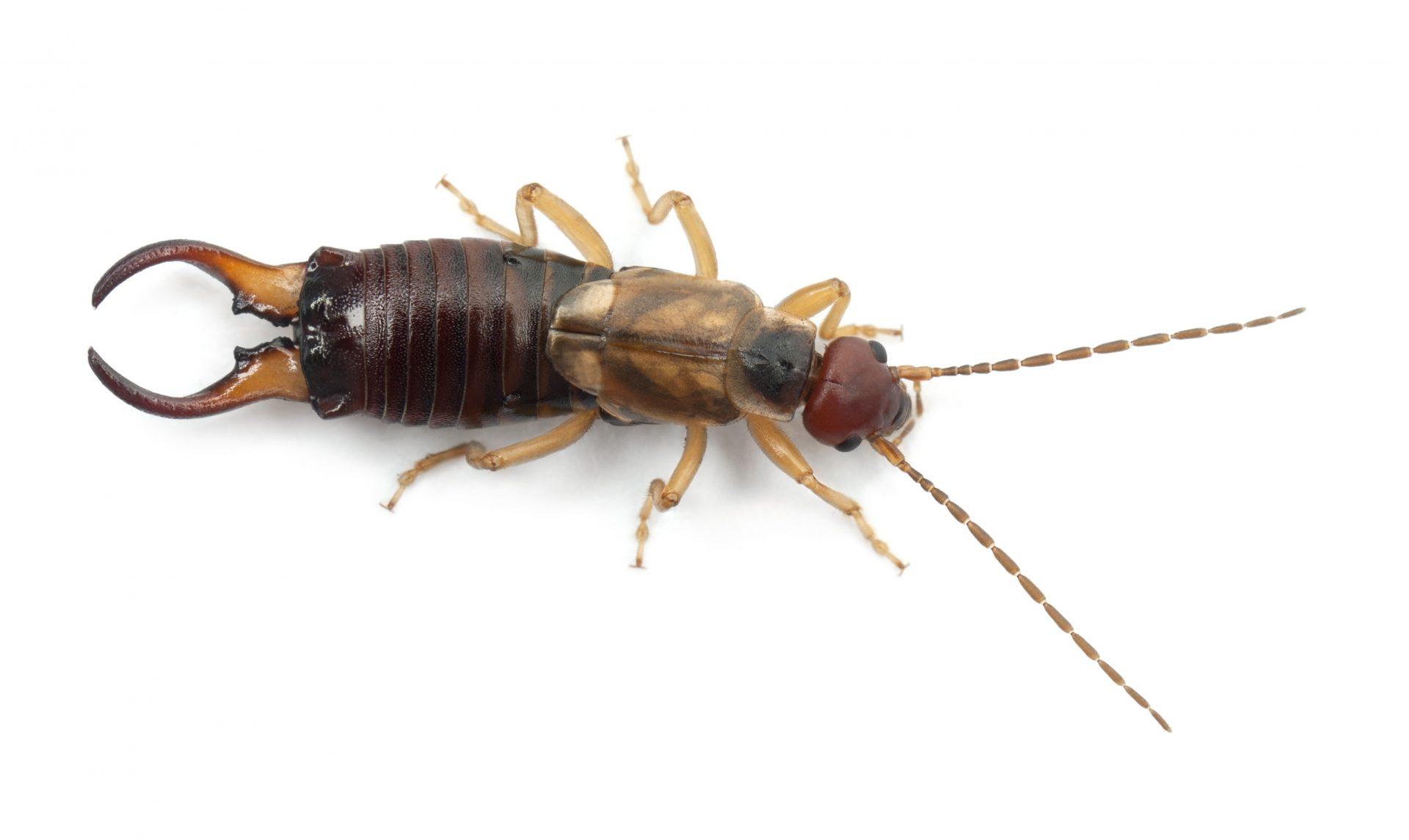 exterminator in columbia --Raven Termite and Pest Control