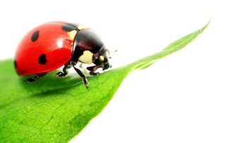 pest control in sykesville