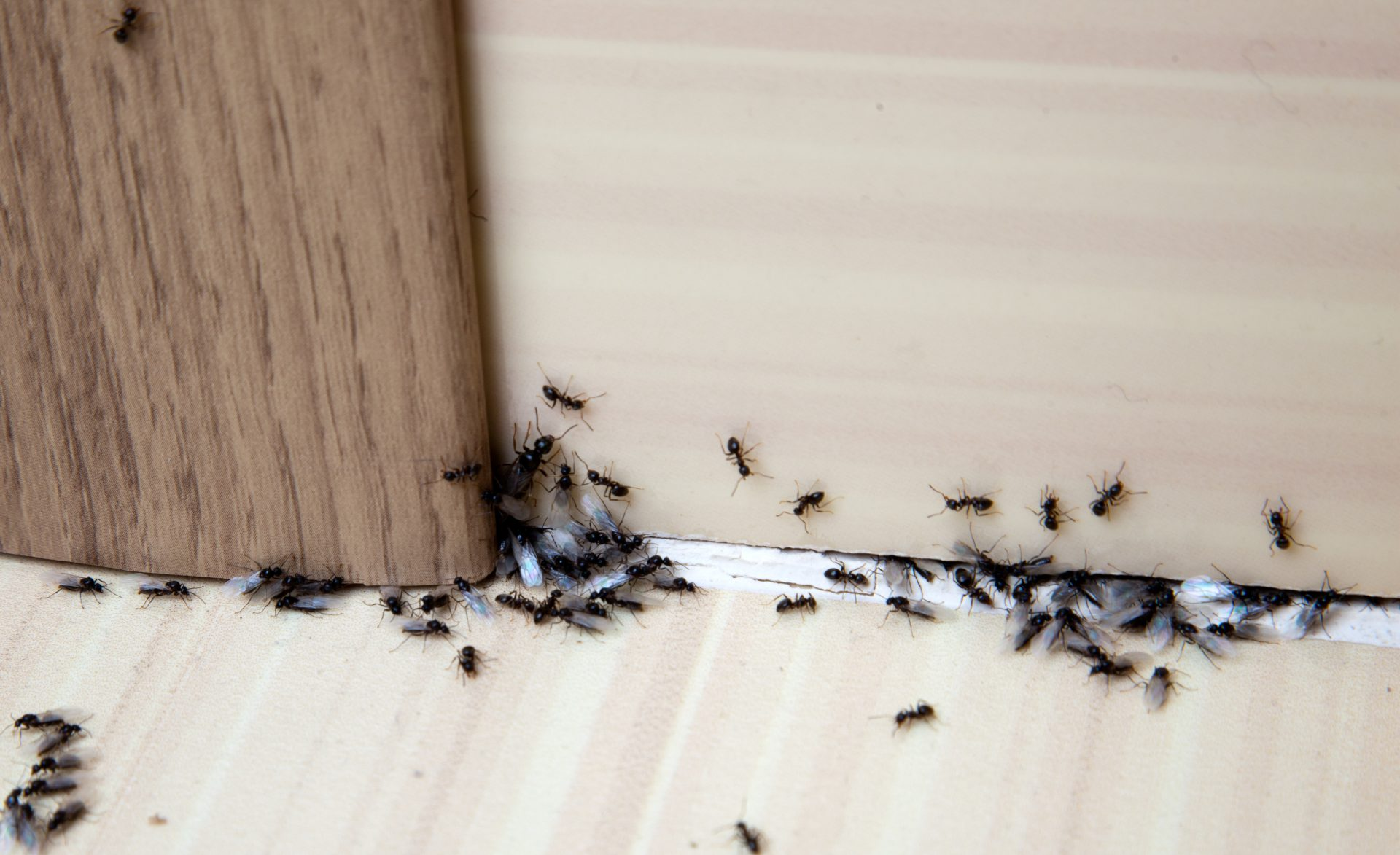 pest control services in Baltimore -- Raven Termite and Pest Control