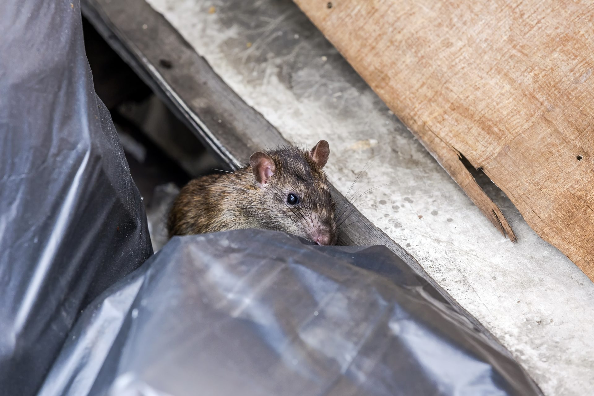 exterminators in howard county - Raven Termite and Pest Control