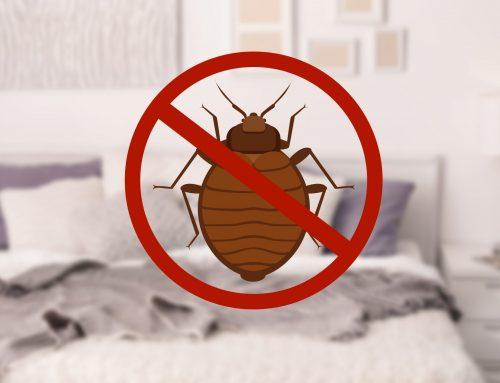 Baltimore's Best Bed Bug Exterminator