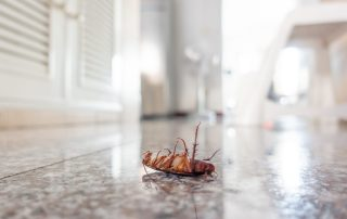 pest control services in Montgomery County -- Raven Termite and Pest Control