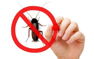 pest control in silver spring -- Raven Termite and Pest Control