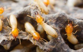 termite control in Baltimore - Raven Termite and Pest Control