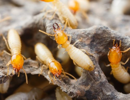 Is Termite Control Needed in the Winter?