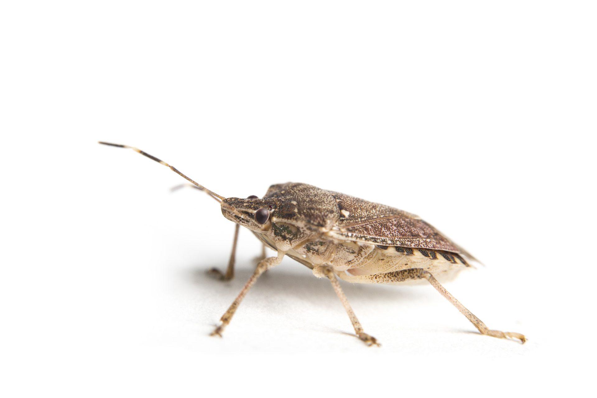 exterminator in Elkridge -- Raven Termite and Pest Control