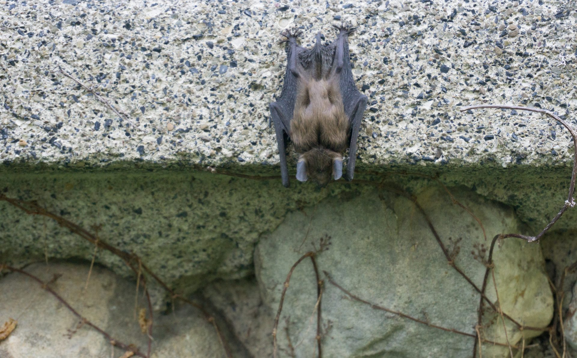 exterminators in Columbia -- Raven Termite and Pest Control