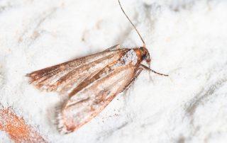 exterminator in Bethesda -- Raven Termite and Pest Control