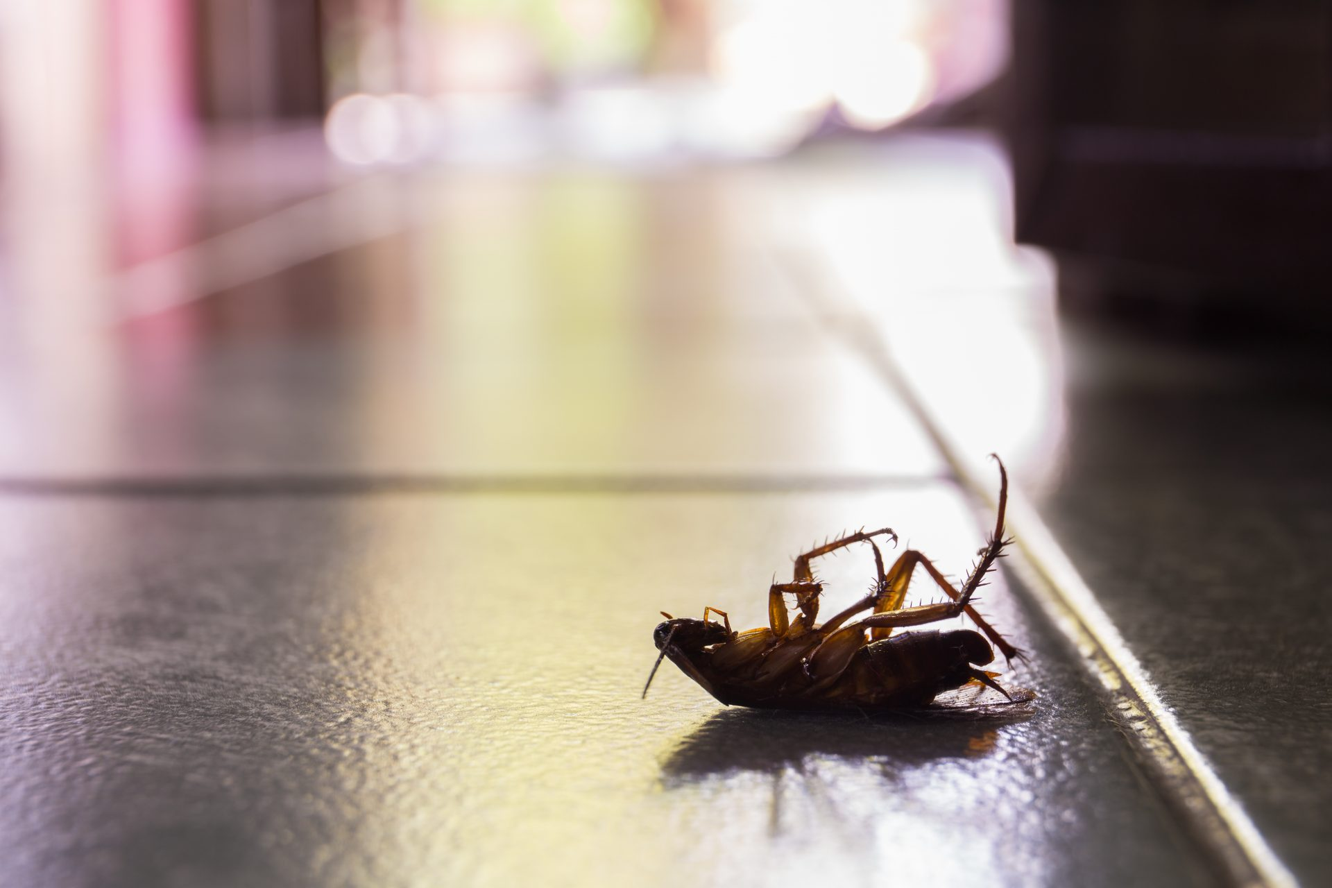 exterminator in Pasadena -- Raven Termite and Pest Control