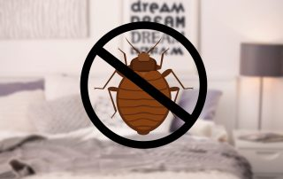 bed bug exterminator in Prince George's County -- Raven Termite and Pest Control
