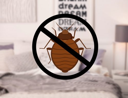 Call a Bed Bug Exterminator Right Away!