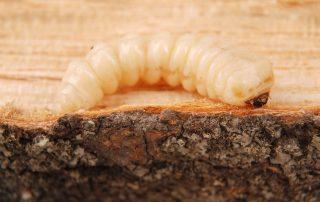 exterminator in Jessup -- Raven Termite and Pest Control