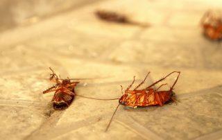 pest control in Laurel -- Raven Termite and Pest Control