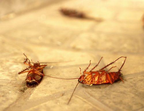 The Pitfalls of DIY Pest Control