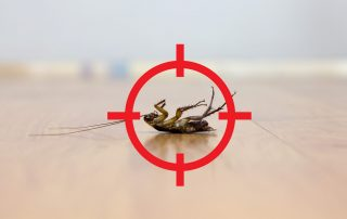 pest control services in Baltimore City -- Raven Termite and Pest Control