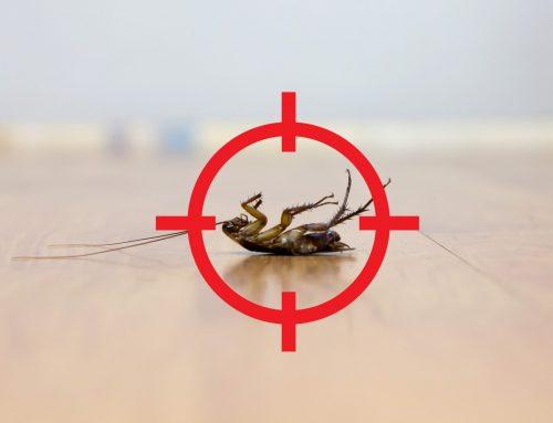 How Pest Control Treats Cockroaches