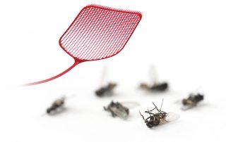 pest control services in Glen Burnie -- Raven Termite and Pest Control