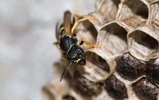 pest control services Carroll County - Raven Termite and Pest Control