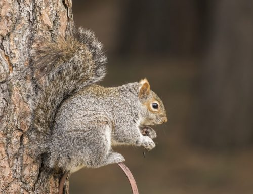 Protect Your Home from Squirrel Damage