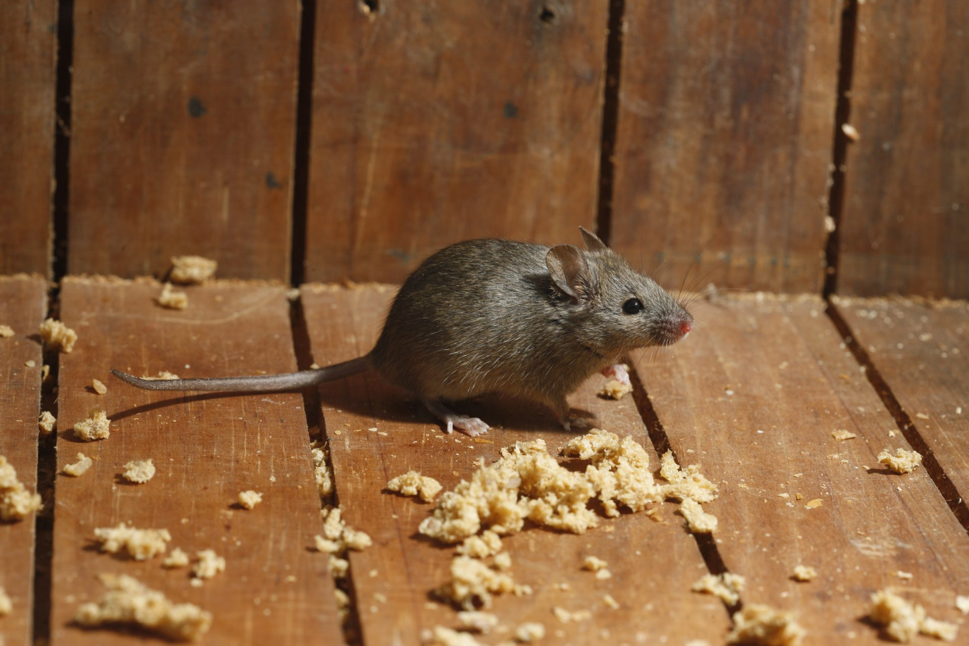 exterminator in Gaithersburg -- Raven Termite and Pest Control