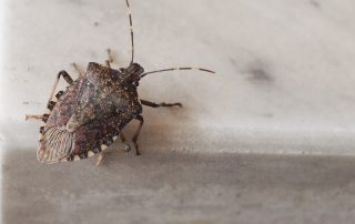 exterminators Eldersburg -- Raven Termite and Pest Control