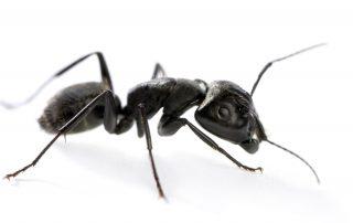 exterminators in Montgomery County -- Raven Termite and Pest Control