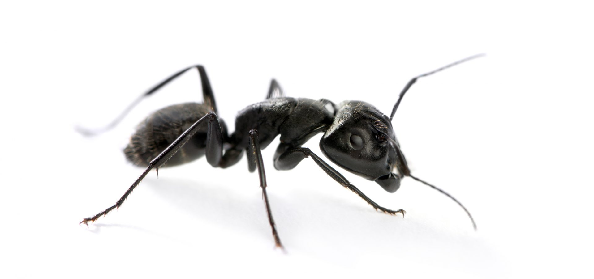 exterminators in Montgomery County -- Raven Termite and Pest Control