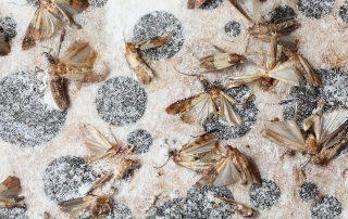 exterminators in Rockville -- Raven Termite and Pest Control