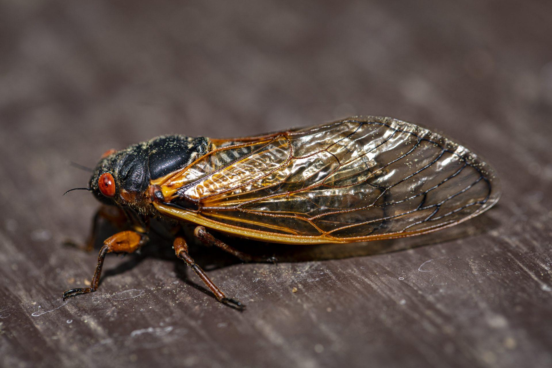 exterminators Gaithersburg -- Raven Termite and Pest Control