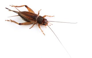 pest control in Dundalk -- Raven Termite and Pest Control