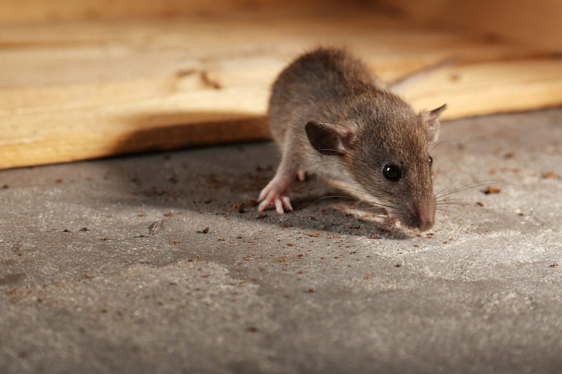 pest control services Ellicott City-- Raven Termite and Pest Control