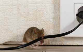 Rodent Control for Commercial Properties | Pest Control in Edgewood | Raven Termite and Pest Control