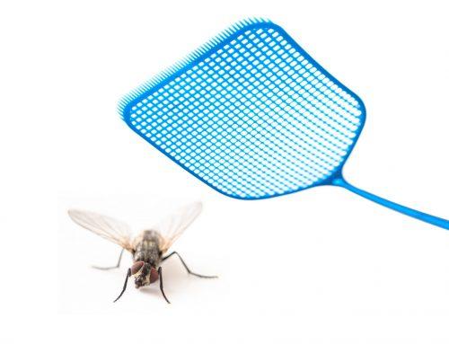 Keeping an Eye on Summer Bugs