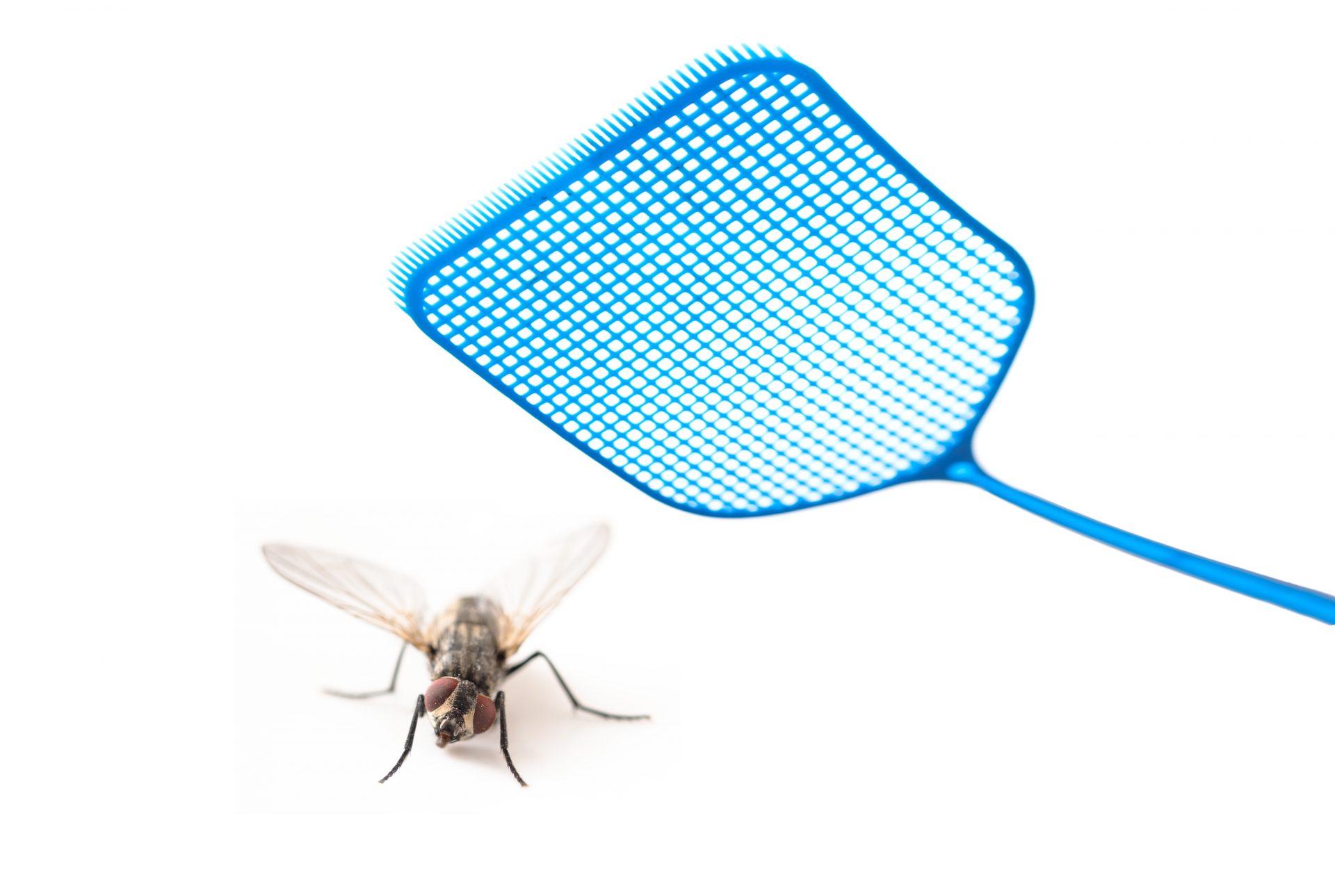 exterminator silver spring -- Raven Termite and Pest Control