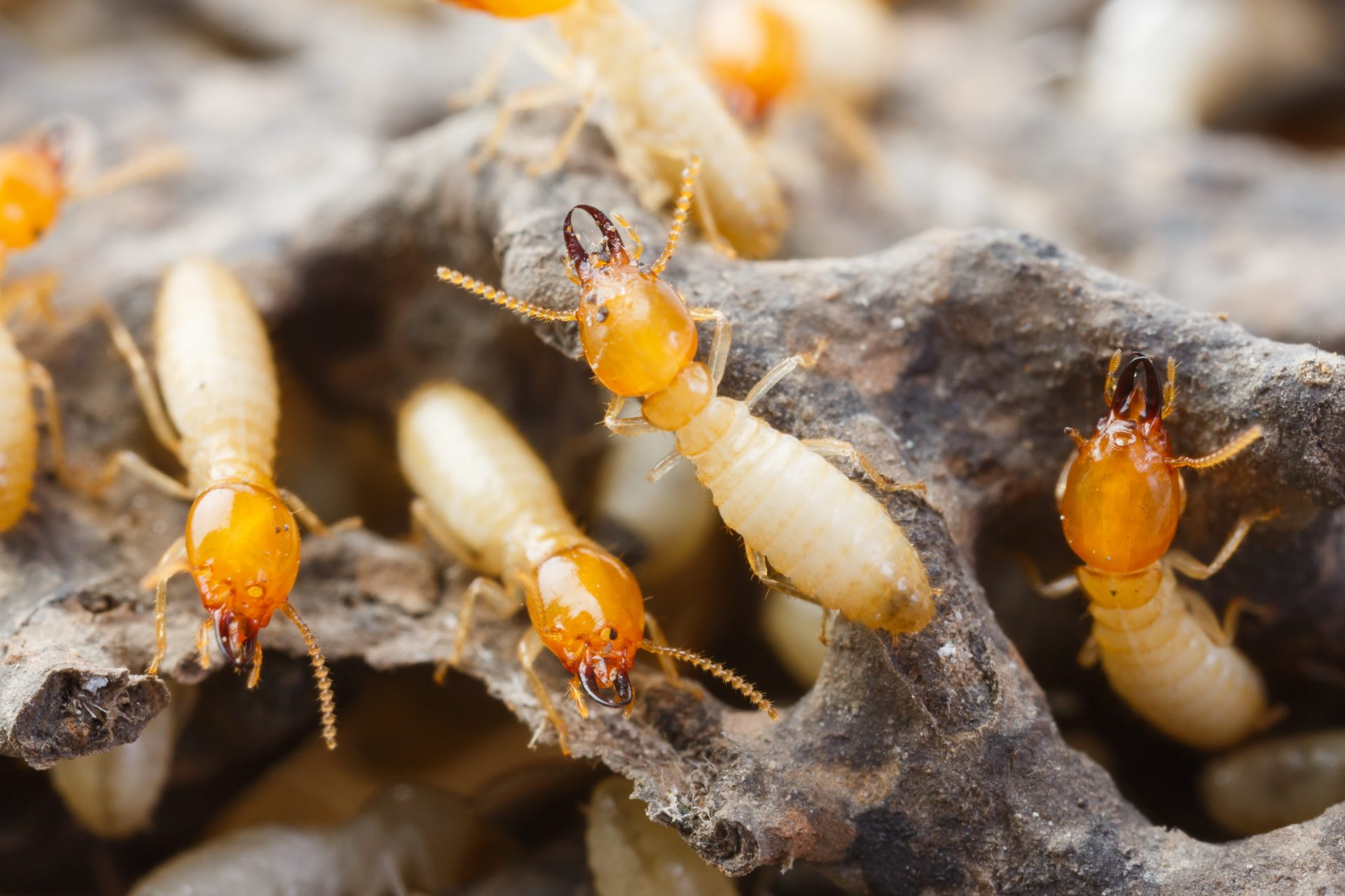 pest control Hunt Valley -- Raven Termite and Pest Control