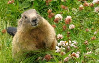 Pest Control To Take Care Of Groundhog Problems | Pest Control in Prince George's County, MD | Raven Termite and Pest Control