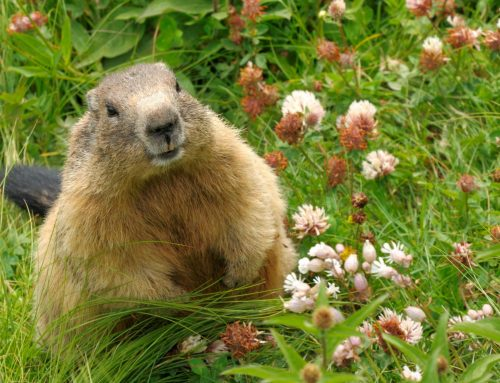 Pest Control To Take Care Of Groundhog Problems