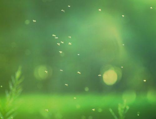 Pest Control to Eliminate a Gnat Infestation