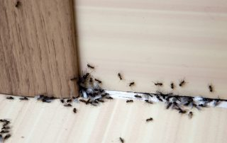 Eliminate Ants... for Good! | Raven Termite and Pest Control | Pest Control Services in Prince George's County