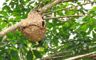How to Remove a Wasp Nest | Pest Control Services in Gaithersburg
