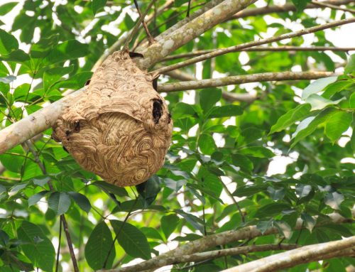 How to Remove a Wasp Nest